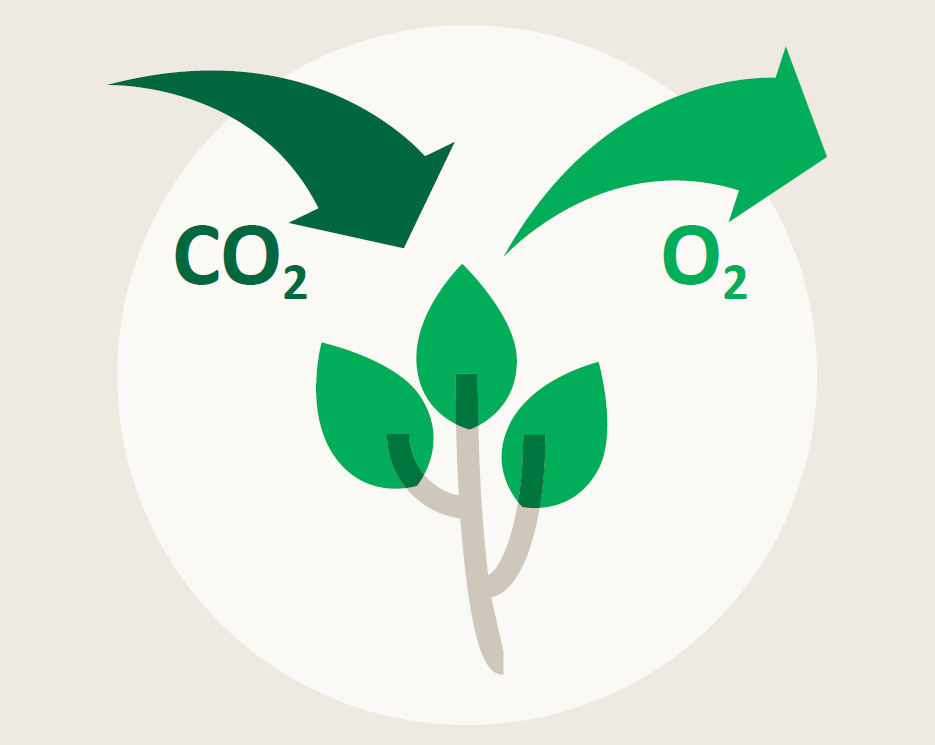 Image depicting take in of CO2 and release of oxygen