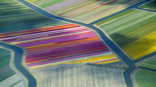 View of the tulip fields from the air
