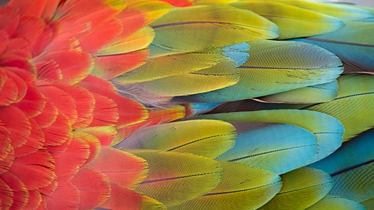Multi-colored parrot feathers