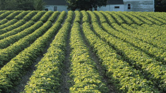 Scenic view of a field of plants on a farm