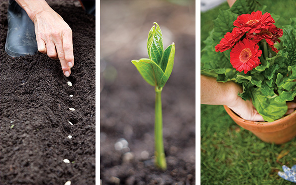 3 images of plants and planting seeds