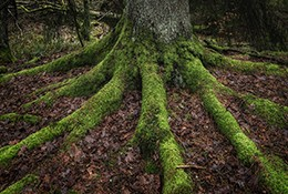 image of a tree roots